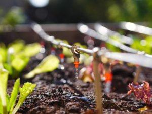 Tư vấn thi công hệ thống tưới tự động sân vườn